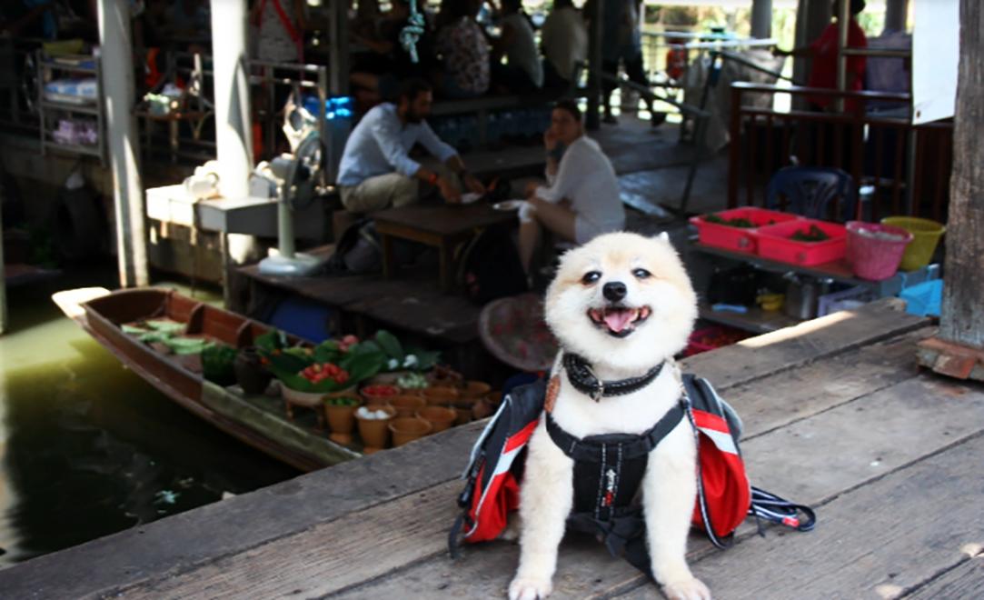 floatingmarket, takemetour, bangkok, local, daytrip, daytour, localexpert