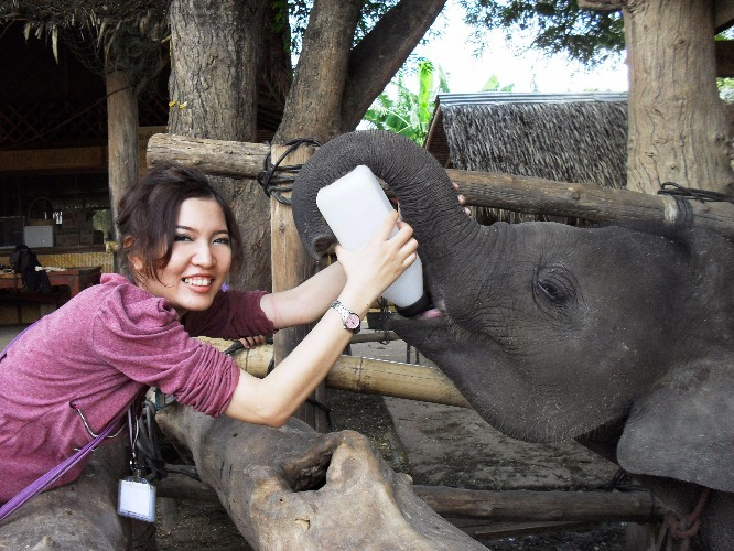 things_to_do_on_christmas_in_thailand_elephant_feeding