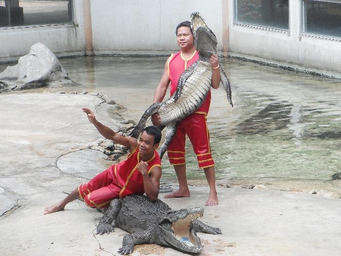 things to do in Bangkok_crocodile farm