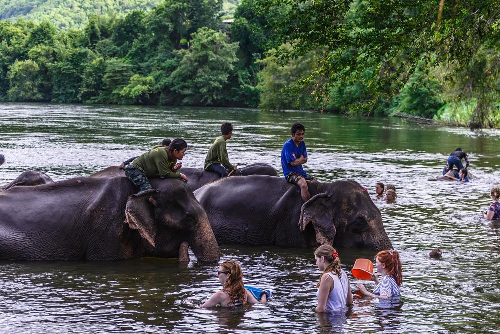 elephantbathing