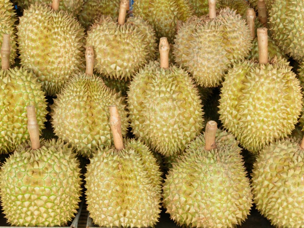 Freshly picked delicious Durian.
