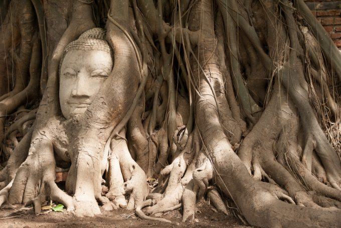 Buddha Head in Tree Roots at Wat Mahathat, the Glorious of Ayutthaya Fair light and sound show venue