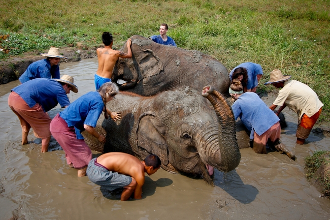 Ethical elephant experience: Bathe elephants and play with them