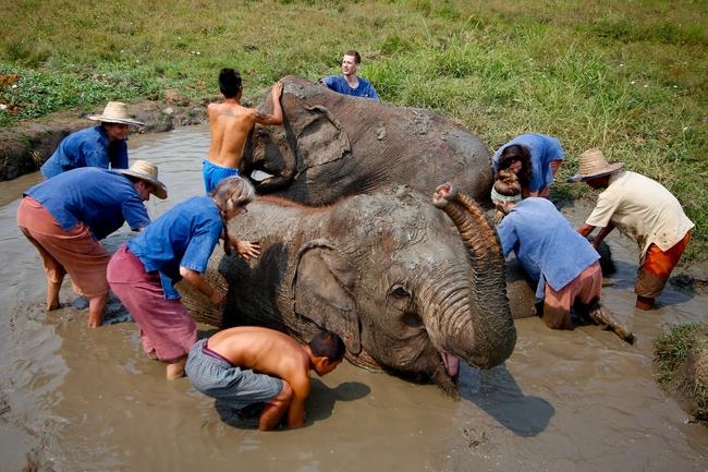 Ethical elephant experience: Bathe elephants and play with them