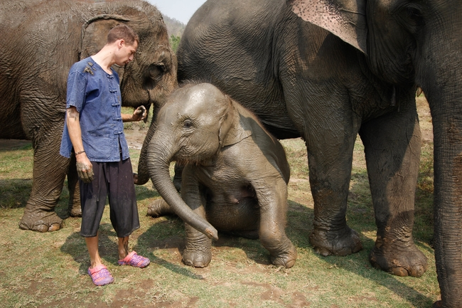 Ethical elephant experience: Let the family stay together