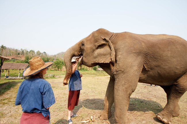 Ethical elephant experience: Walk beside elephants and take care of them instead of riding them