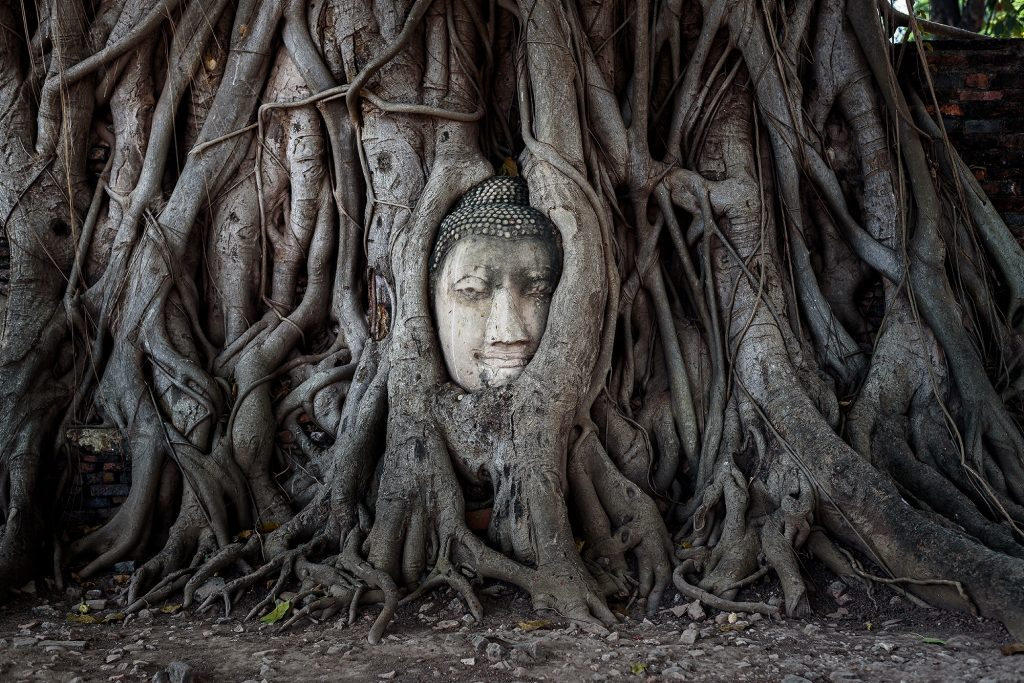 Best Day Trips from Bangkok: Wat Mahathat Ayutthaya