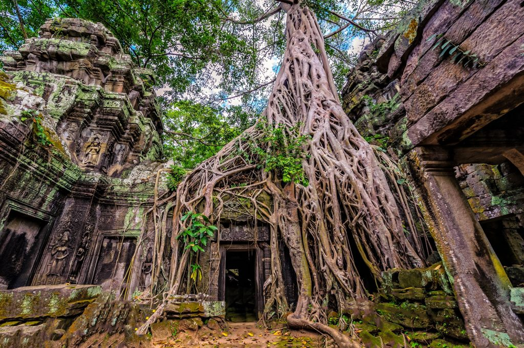 Ta Prohm Temple, trees overgrowing on temple, jungle temple, Siem Reap, top place to visit in Cambodia