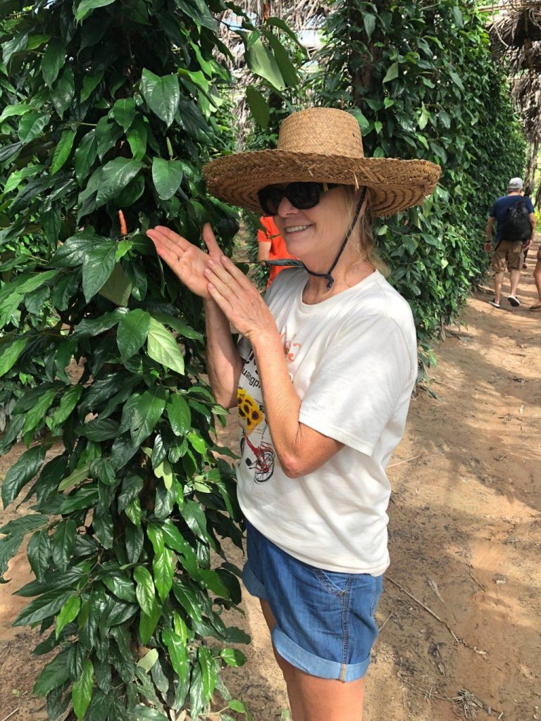 Pepper Farm, Kampot, Cambodia