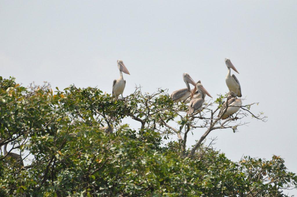 Prek toal floating village, prek toal bird sanctuary