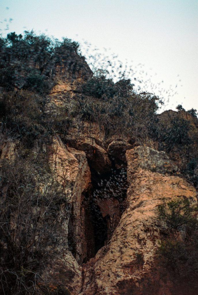 Battambang Bat Cave, Phnom Sampov, Cambodia